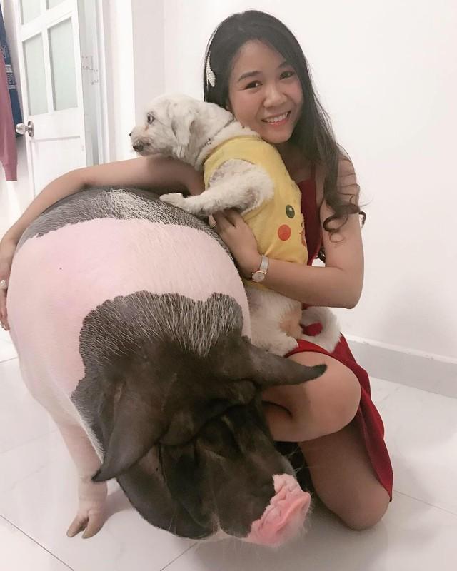 Cô nàng Hoài Yên và chú lợn mini của mình