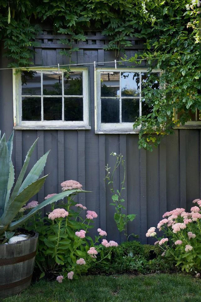 Những bụi cây nở hoa rực rỡ làm duyên bên hàng rào.