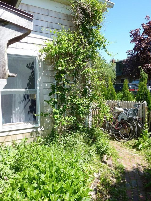 Bên hông nhà được chị vợ khoanh vùng tạo góc xanh tươi trồng các loại cây trồng tươi tắn.