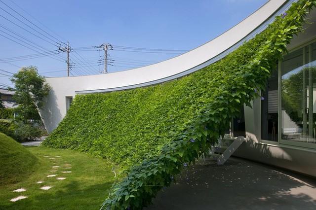 Ở bất kỳ góc nhỏ nào trong ngôi nhà đều có thể ngắm trọn nét xanh tươi, mát mắt từ giàn cây hay bãi cỏ bên ngoài.