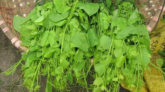 Hương vị của rau bò khai rất đặc biệt. Nó không hề bị lẫn với các loại rau rừng khác, là sự hoà quyện của hương đất, hương rừng và sự tinh khiết của khí trời vùng núi cao.