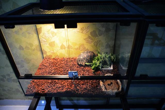 Một lồng nuôi rùa có đèn sưởi và trang trí rất đẹp. Ảnh: Thanh Niên