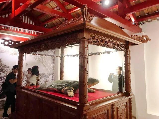 Toàn cảnh tủ kính nơi trưng bày cụ rùa.