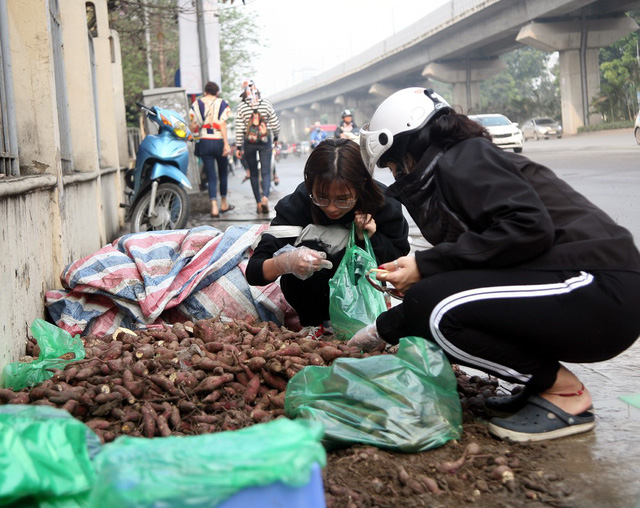 Cạnh cổng trường ĐH KHXH&NV chỉ còn khoảng 100kg khoai. Theo một tình nguyện viên cho biết: Những ngày vừa qua do lượng người dân quan tâm và kéo đến mua nhiều nên lượng khoai tiêu thụ cũng trên 3 tấn.