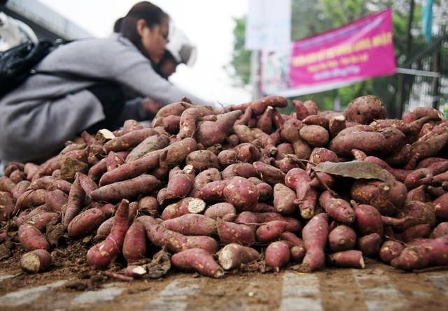Từ đầu mùa đến nay, cộng đồng tình nguyện đã bán được khoảng 600 tấn khoai ở đầu TP.HCM và Hà Nội. Một số cá nhân, doanh nghiệp khác cũng giúp tiêu thụ thêm hàng trăm tấn khoai khác.