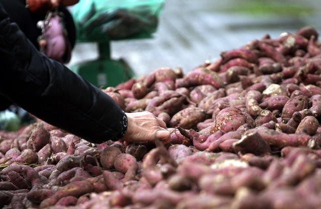 Hiện tại số khoai còn lại khoảng nửa tấn nhưng do củ không được to, đẹp nên nhiều thanh niên tình nguyện đã bán với giá 10.000 đồng/kg.