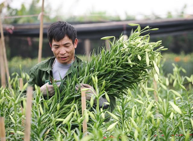 Ông Nguyễn Công Quản cho biết: Bình quân mỗi sào khi trừ hết tất cả các chi phí đi cũng lời được từ 30 - 40 triệu đồng.
