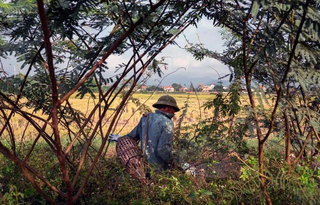 Ông Thy, một nông dân đi săn chuột ở Quảng Ninh vào tháng 12/2018. Ảnh chụp màn hình