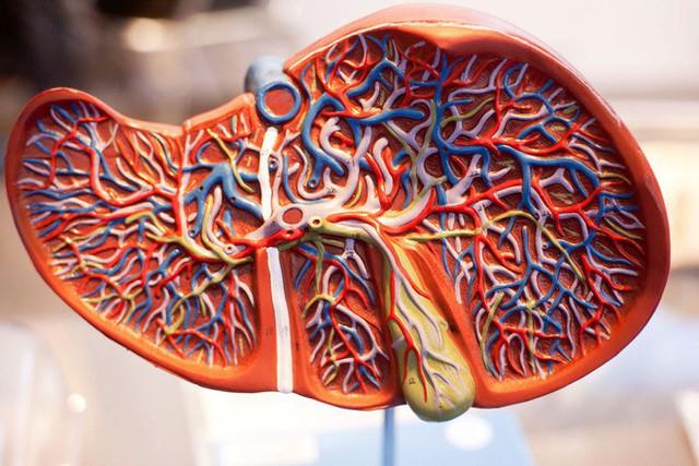 Dấu hiệu thay đổi trên da cho thấy bạn đã bị bệnh gan: Nếu trùng khớp thì nên đi khám ngay - Ảnh 6.