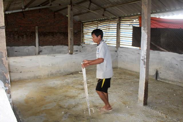 Trước đó, bệnh dịch tả lợn châu Phi xuất hiện tại huyện Kinh Môn và huyện Tứ Kỳ. Ảnh: Đ.Tùy