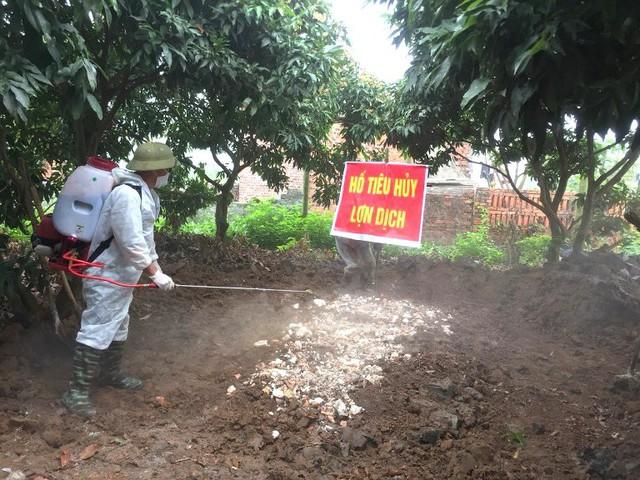 Ngày 9/3, ổ dịch bệnh tả lợn châu Phi xuất hiện tại xã Yên Đức. Ảnh: P.Tăng