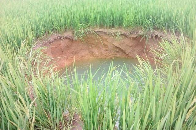 Hố tử thần giữa ruộng lúa ở Cam Lộ