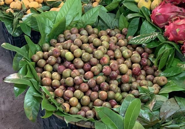 Mận Mộc Châu có giá dao động từ 200.000-250.000 đồng/kg vẫn hút khách