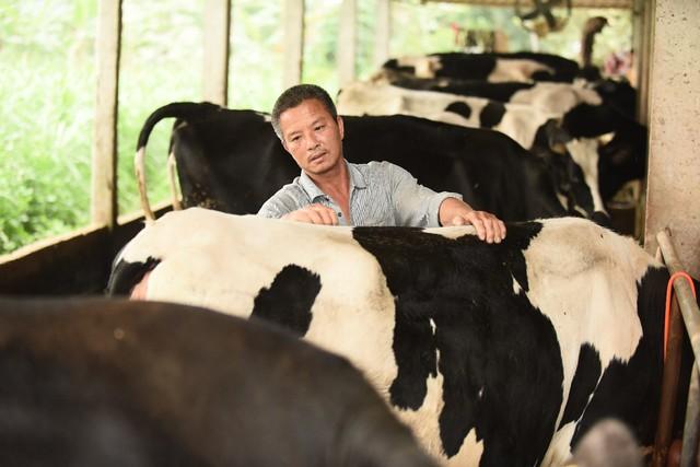 Người nông dân tiếp cận với mô hình chăn nuôi bò sữa theo hướng bền vững và đặt niềm tin vào hiệu quả kinh tế cao mà dự án mang lại
