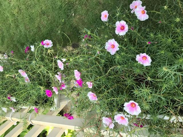Các loại hoa đua nhau khoe sắc trong sân nhà Thân Thúy Hà.