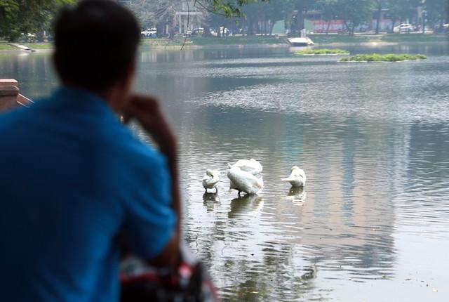 Nhiều người dân vẫn có thói quen ra khu vực hồ Thiền Quang ngắm đàn thiên nga tắm mát, vui chơi.