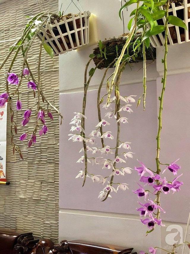 Những giò lan nở rực rỡ làm đẹp mọi góc nhà.