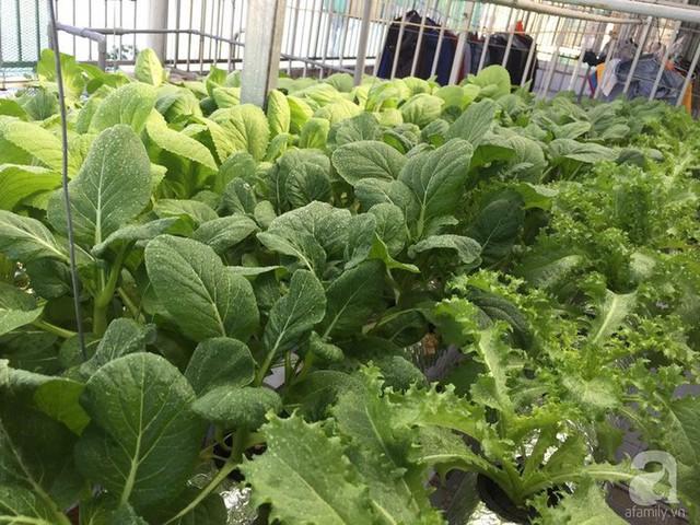 Khu vườn nhỏ xinh xắn với đủ các loại rau.