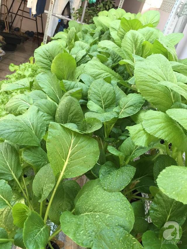 Các loại rau khá đa dạng giúp khu vườn nhỏ xanh tốt, bữa ăn thêm phong phú.