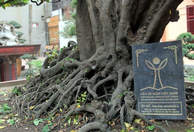 Những cây khế ông Toàn sở hữu đều được chứng nhận là cây di sản Việt Nam.