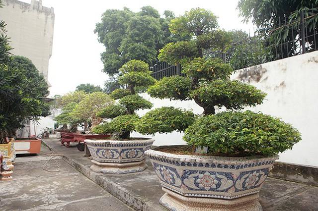Cặp khế trên 400 năm tuổi do đích thân vua Gia Long trồng và chăm sóc, được đánh giá là cặp khế cổ nhất Việt Nam. Sau nhiều năm săn đón và mua về thành công, ông đã đặt tên cho cặp khế cổ này là vợ chồng.