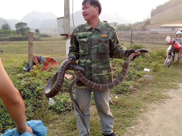 Người đàn ông này chịu thiệt thòi khi bị mất số tiền mua rắn. Ảnh: NĐ