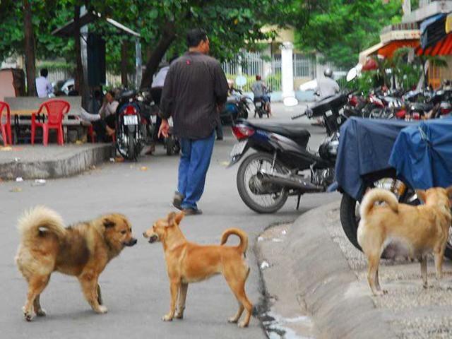 Chó thả rông là mối nguy hiểm bất ngờ cho mọi người,nhất là trẻ em.