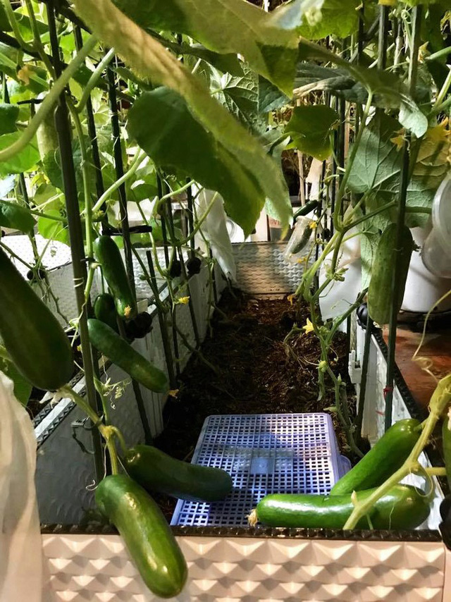 Chị quan niệm, việc làm vườn đảm bảo được một nguồn rau củ an toàn cho gia đình, còn vấn đề thực phẩm sạch không thể tuyệt đối, bởi nhiều thực phẩm không tự trồng, tự nuôi được vẫn phải mua ngoài. Quan trọng nhất khu vườn mang lại đam mê, khoẻ và vui cho tất cả mọi người trong nhà.