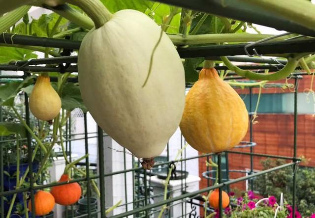 Vườn có nhiều loại từ rau ăn lá (rau cải, rau muống, mồng tơi, xà lách và các loại gia vị), các loại rau ăn trái (khổ qua, dưa leo, bí, đậu đũa, đậu rồng, mướp, đậu cove...) và còn trồng thêm một số cây ăn quả (dưa hấu, dưa lưới...).