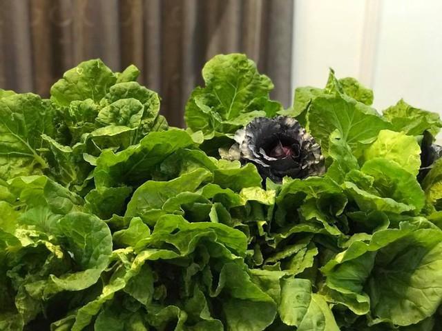 Đối với cải dún, ngay chính các thành viên trong gia đình mỗi lần lên vườn là giật mình vì tốc độ lớn của rau. Những cây rau nặng đến 300 gr, có bận chị thu hoạch vài kg mỗi lần, phải đem biếu tặng bớt. Nhìn những loại rau quả tươi tốt quá mức từ vườn của chị, nhiều người bạn còn đùa trồng ra rau đột biến.