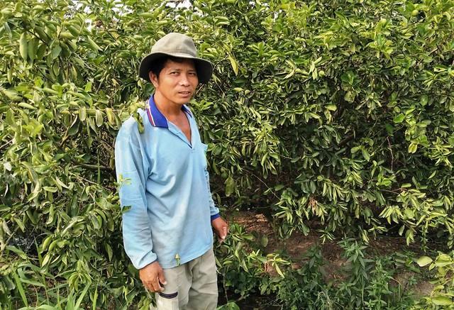 Anh Phan Văn Tâm bên vườn chanh không hạt Limca của gia đình