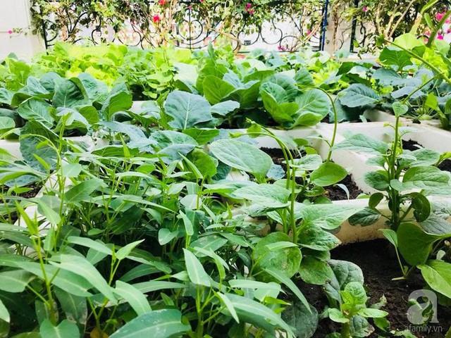 Chị trồng các loại rau theo mùa.