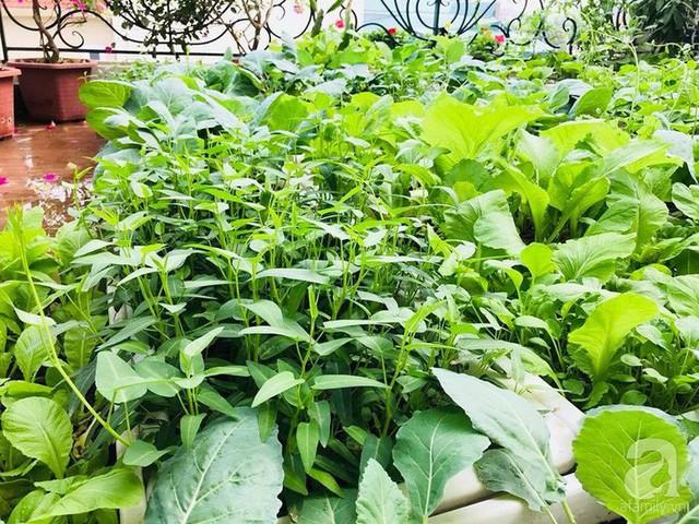 Rau tươi tốt được chị trồng chủ yếu trong chậu nhựa.
