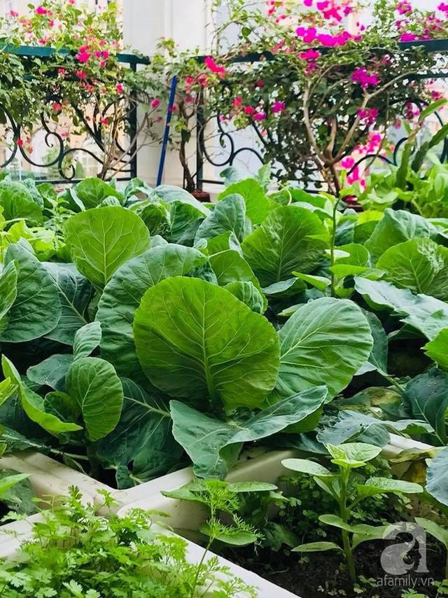 Vẻ đẹp của các loại rau trồng xen kẽ nhau.