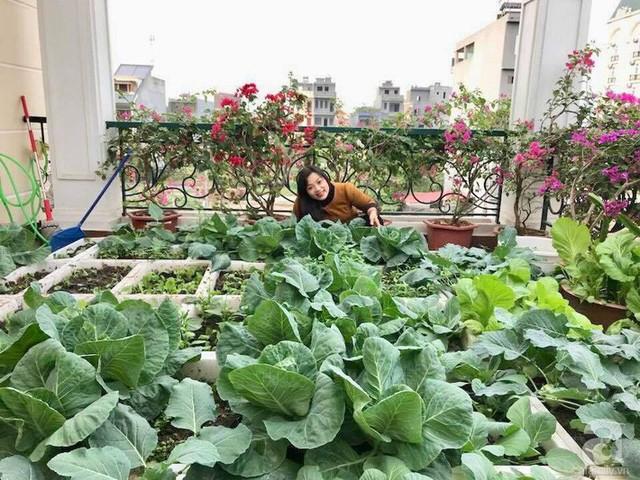 Ai ngắm vườn sân thượng nhà chị Mai Liên đều tấm tắc khen bởi bàn tay khéo léo và tình yêu với thiên nhiên của chị.