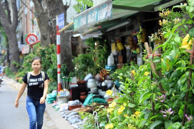 Trên đường Hoàng Hoa Thám, người đi bộ không chỉ mãn nhãn với các loại cây cảnh được sắp xếp ngay thẳng, tăm tắp và đầy ắp trên khu vực vỉa hè - lối đi của người đi bộ...