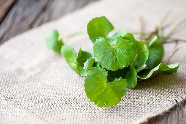 Rau má là loại rau có tính giải nhiệt cực tốt được dân gian lưu truyền bao đời nay.