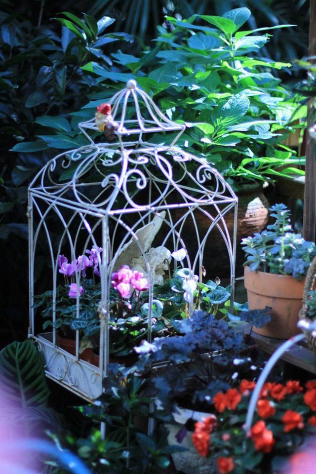Lồng chim được tận dụng để trồng cây.