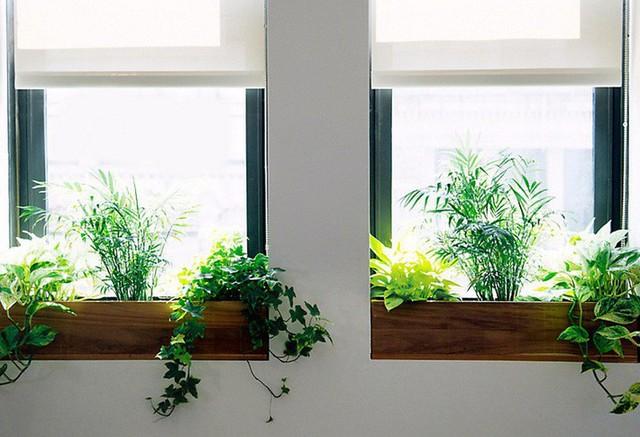 7. Với 2 cửa sổ gần nhau có thể trồng cây theo kiểu tương xứng như thế này để giảm bớt cảm giác nhàm chán. Khung cửa sổ sẽ trở thành điểm nổi bật khiến cho ngôi nhà của bạn trở nên đáng yêu hơn.