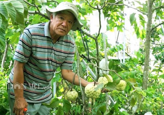 Ông Năm sở hữu vườn mãng cầu nữ hoảng khổng lồ với hơn 2.000 cây. Ảnh: M.A.