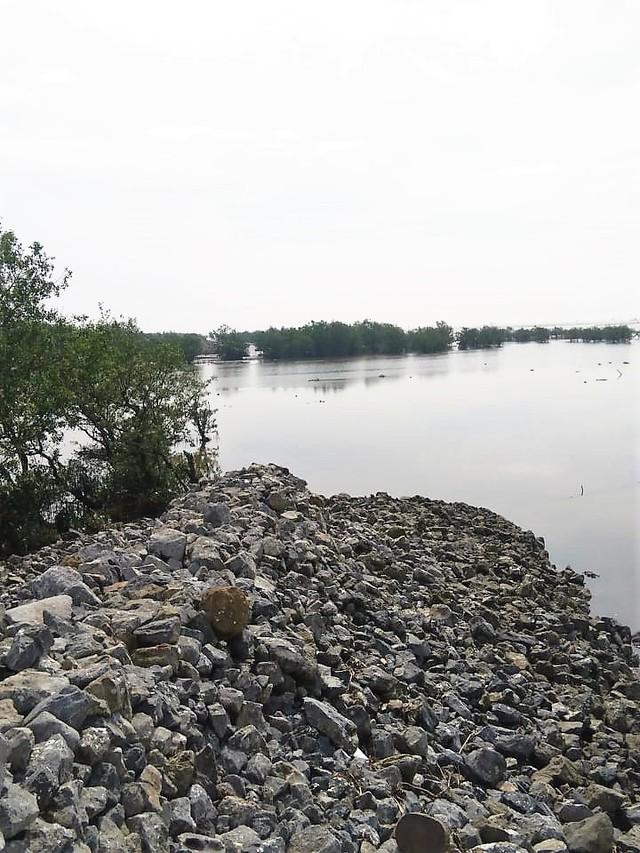 Phía rừng ngập mặn hiện không bị rác thải tấn công