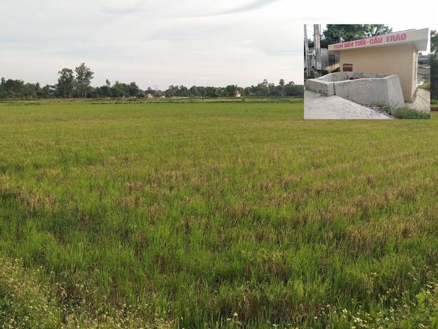 Nhiều cánh đồng của người dân bỏ hoang vì thiếu nước. Trạm bơm Cầu Trào bị ông Nhương xiết nợ (ảnh nhỏ). Ảnh: Gia Hân