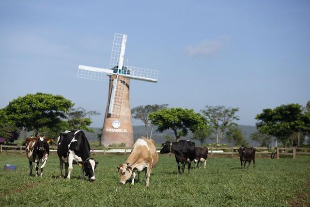 Vinamilk tiếp tục là thương hiệu được chọn mua nhiều nhất ở cả thành thị và nông thôn - Ảnh 5.