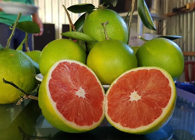 Những trái cam có ruột đỏ au rất bắt mắt trong vườn nhà anh Sơn