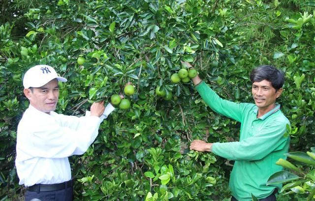 Anh Sơn (áo xanh) người tiên phong trồng cam ruột đỏ ở Đồng Tháp