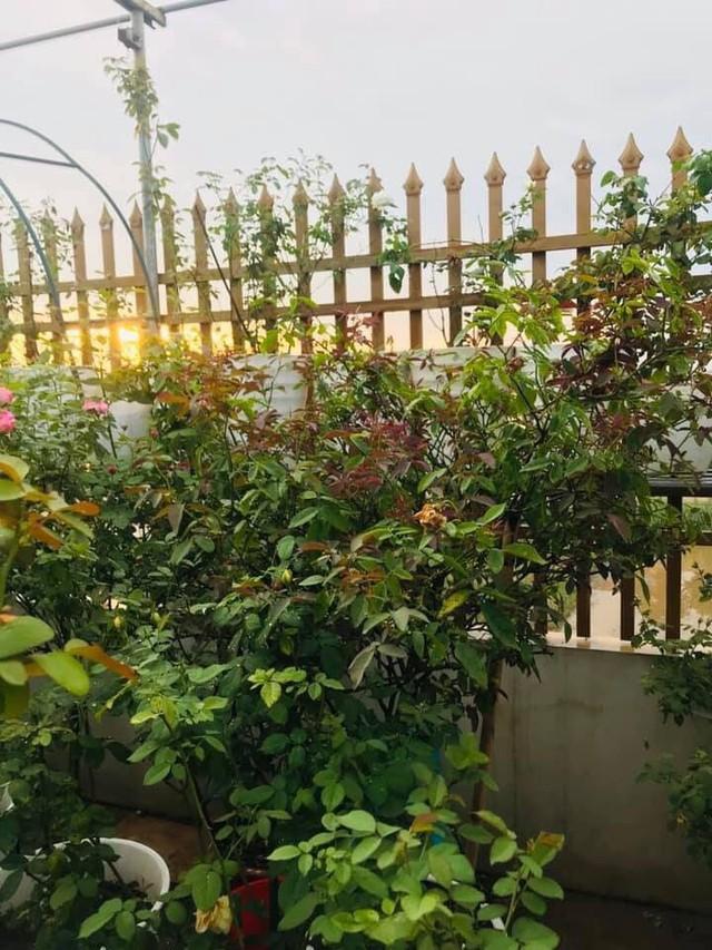 Một góc đẹp mê hoặc trên vườn sân thượng.