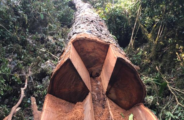 Hình ảnh phá rừng tại Khu bảo tồn thiên nhiên Sông Thanh - Quảng Nam (năm 2018) và đất trống đồi trọc vì nạn phá rừng ồ ạt. Ảnh: NVCC
