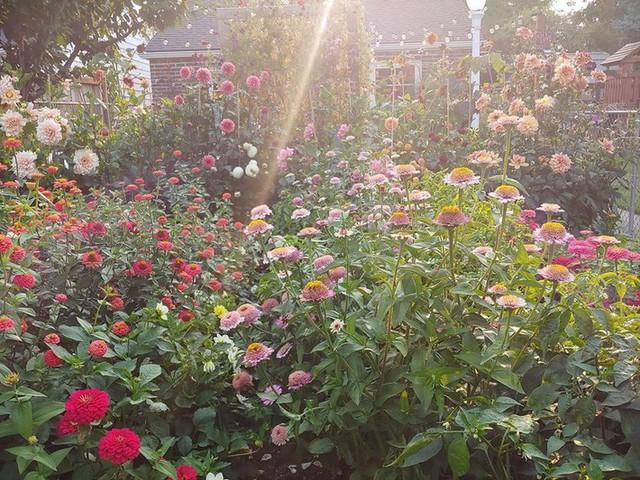 Khu vườn đầy hoa.