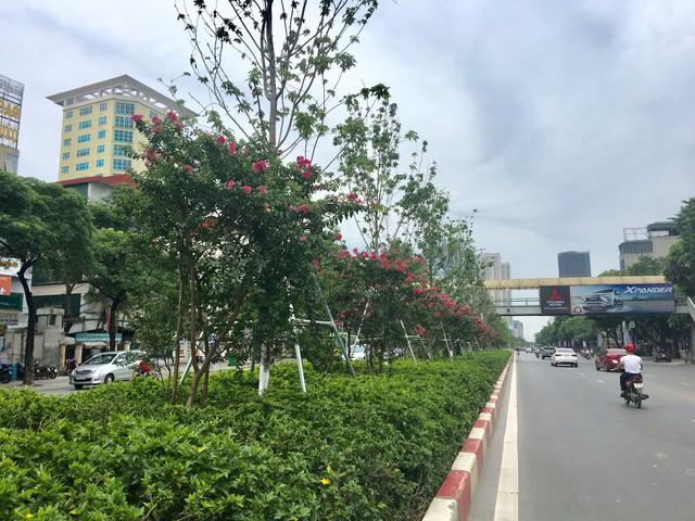Hoa tường vi có tên khoa học là Rosa multiflora hay còn nhiều tên gọi khác như tầm xuân nhiều hoa, hồng nhiều hoa, tường vi Nhật, dã tường vi,… Tại Việt Nam, hoa tường vi được trồng ở Hà Nội và Đà Lạt.