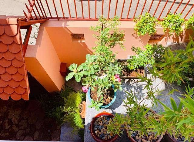 Các loại cây ưa sáng được nữ nghệ sĩ đặt ở vị trí đón nắng còn những chậu phát tài, mật cật nằm rải rác trên cầu thang, bậu cửa sổ.